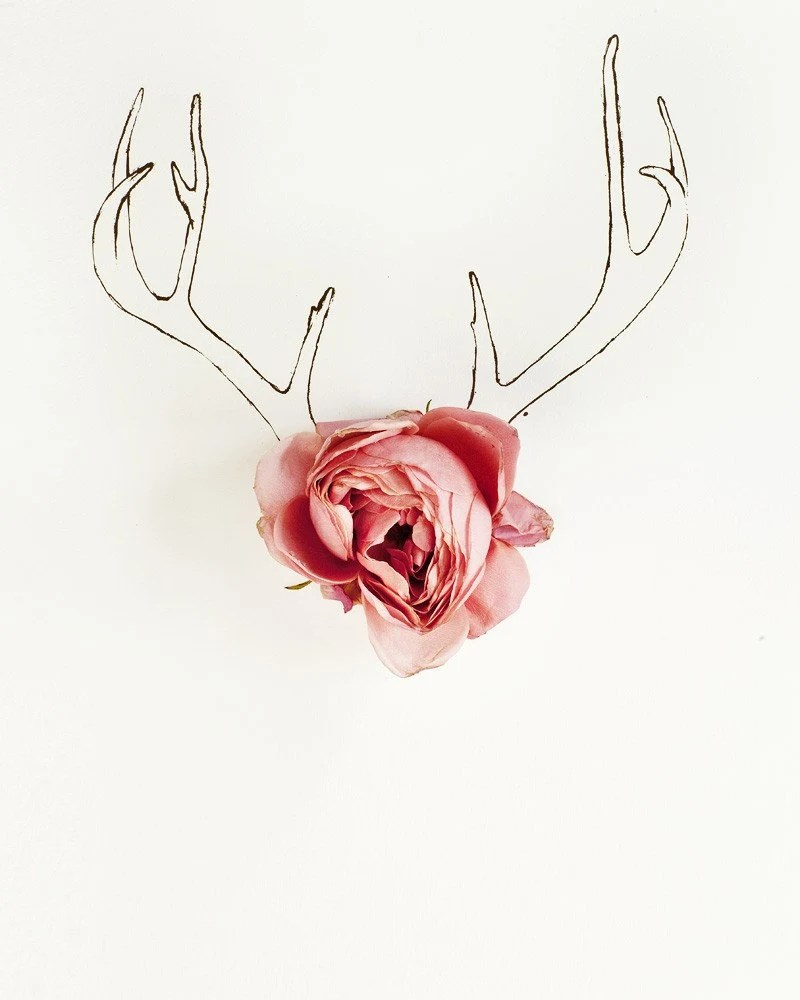 Antler drawing and flower photograph 4215