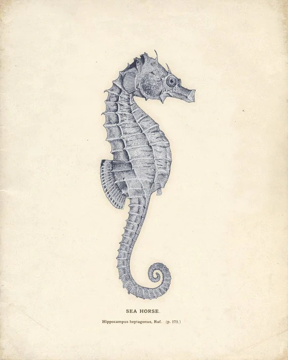Antique Sea Horse Print in Blue 8x10