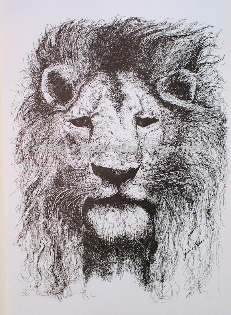 Vintage Lion Print Pen and Ink Drawing on stock paper