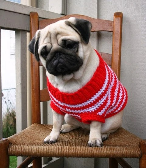 Peppermint sweater