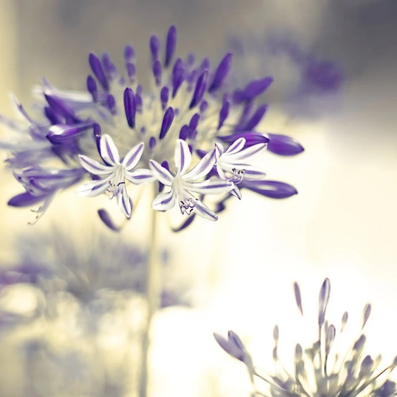 Fine Art Flower Photography Print by Raceytay on Etsy
