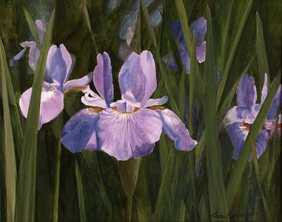 Original Watercolor Wild Iris Print by Laurie Rohner