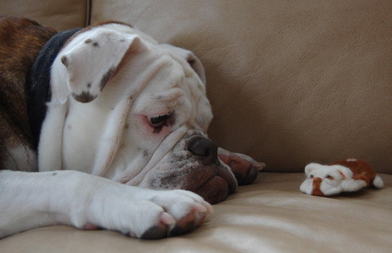 Bella needle felted bulldog