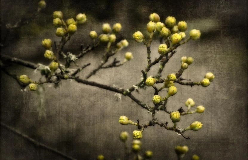 Out of Winter - 8x12 Fine Art Photography Print
