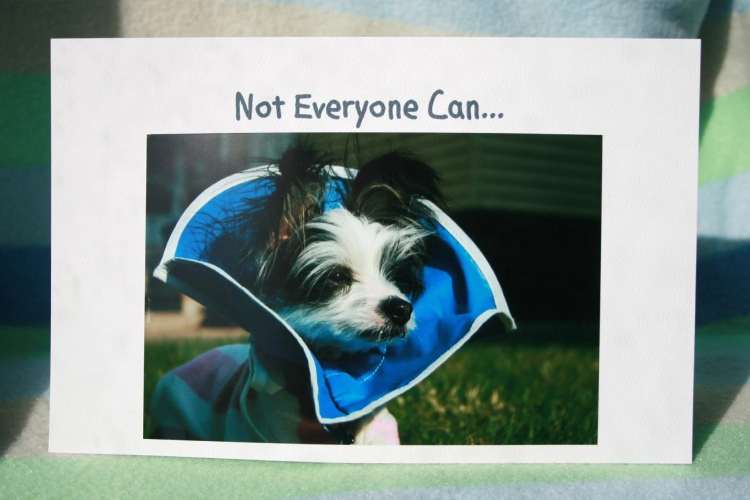 Printable Get Well Cards For Dogs Trials Ireland