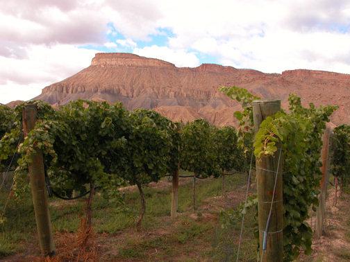 mt-garfield-vineyards