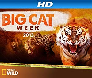 """Big Cat Week"" Storm Cats"