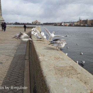 Roosevelt Island birds 1