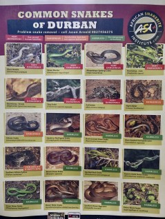 Durban snakes