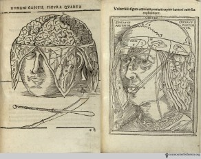 Johann (Eichmann) Dryander (1500-1560). Anatomiae, hoc est, corporis humani dissectionis pars prior… Marburg: Eucharius Cervicornus, 1537. Dryander's work contains a series of woodcuts depicting the dissection of the brain, starting with the removal of the upper skull and continuing through the hemispheres, cerebellum, and skull base. His book also contains a diagram of the brain's ventricles. Illustrations like these had appeared since at least the 1300s, and Dryander's artist took inspiration from Hundt's Antropologium. Dryander's illustrations—including his brain figures—in turn influenced anatomical texts to come, many of which (like the Fabrica) showed the anatomy in greater detail.