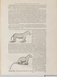 Short-legged jaguar. Historia naturalis Brasiliae, 1648, page 235.