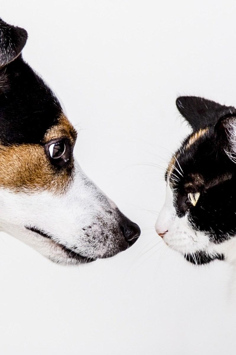 好きを仕事にすべきかどうかで睨み合う猫と犬