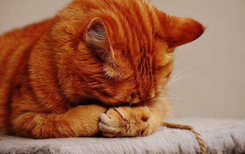 転職の面接での失態を後悔する猫