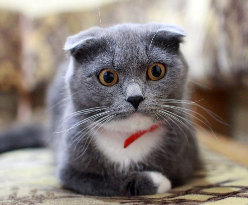 てんこ盛りの求人票に驚く猫