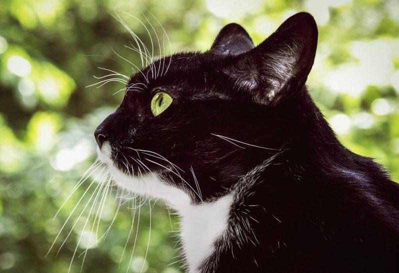 就活や転職に使える口コミサービスを探す猫