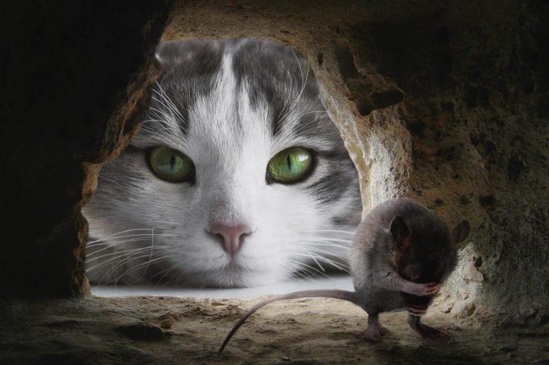 自己成長について、ねずみに説教する猫