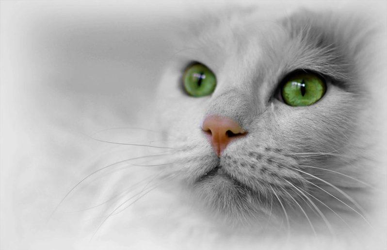 面接で趣味を質問されて困る猫