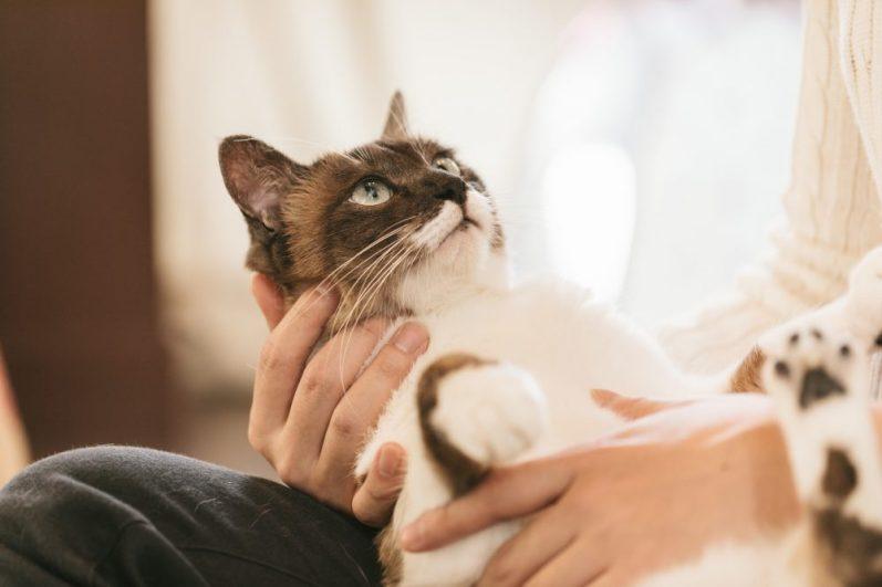 就活にコネ採用があるのかを知りたがる猫