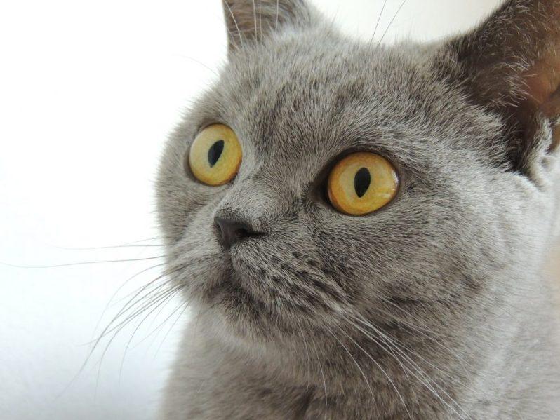 就活で遠回しに自慢されて驚く猫