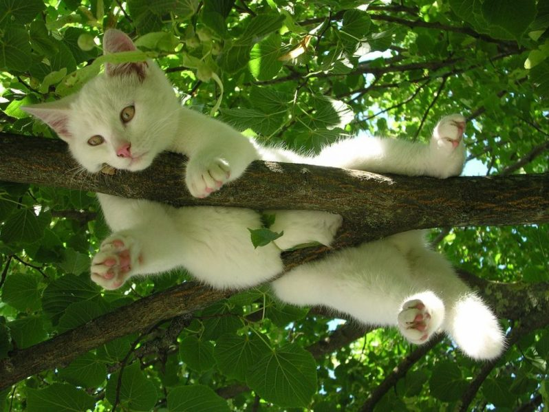 就活や転職の面接で、強みと弱みの伝え方を分かっていない猫