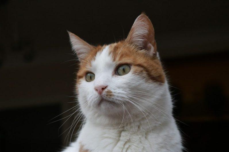 無難な就活スーツを眺める猫