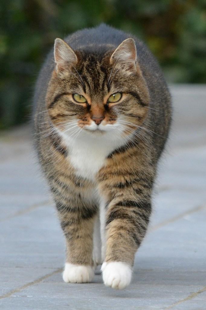 社会人インターンでマッチョになった猫