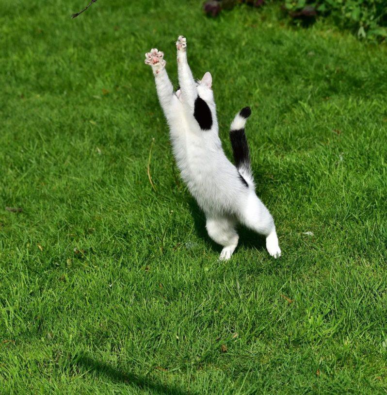 サマーインターンではしゃぐ猫