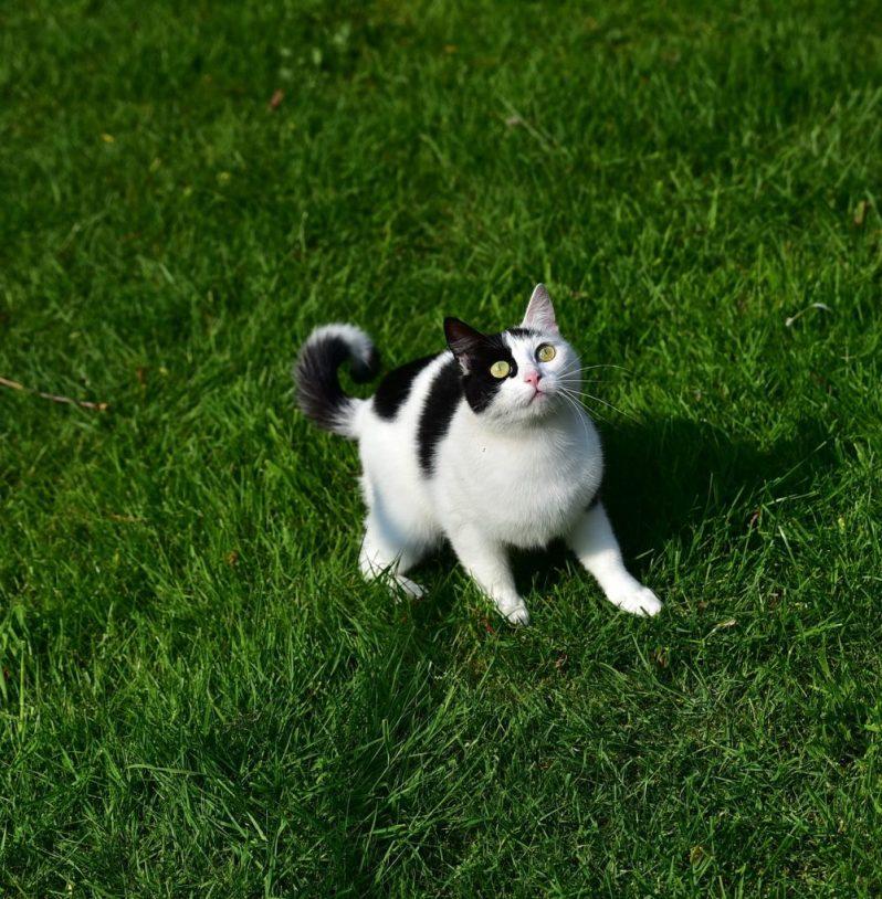 秋インターンと冬インターンの募集締切を気にする猫