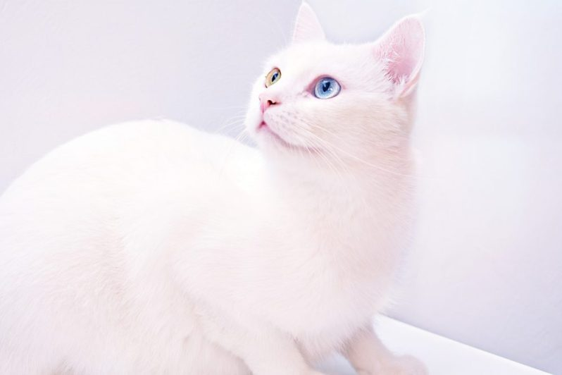新卒採用で通年採用している優良企業を探す猫