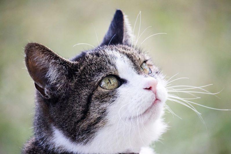 自己PRと学生時代頑張ったことについて考える猫
