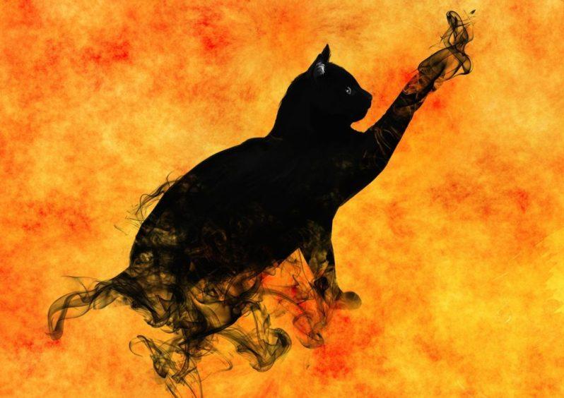 ブラック企業を見つけた黒猫