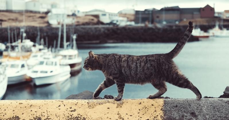 リツイート職人を探す猫