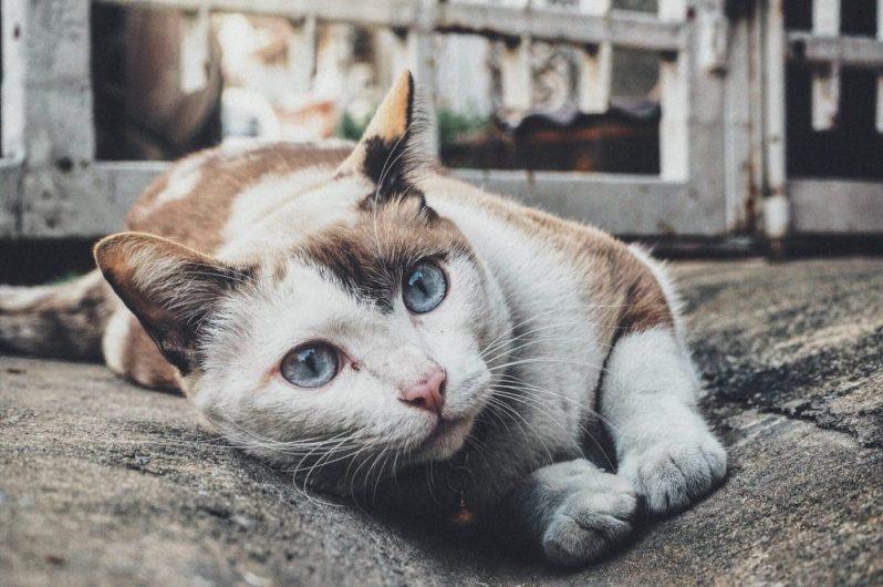 面接で評価されない自己PRに、鉄板パターンがあることに驚く猫
