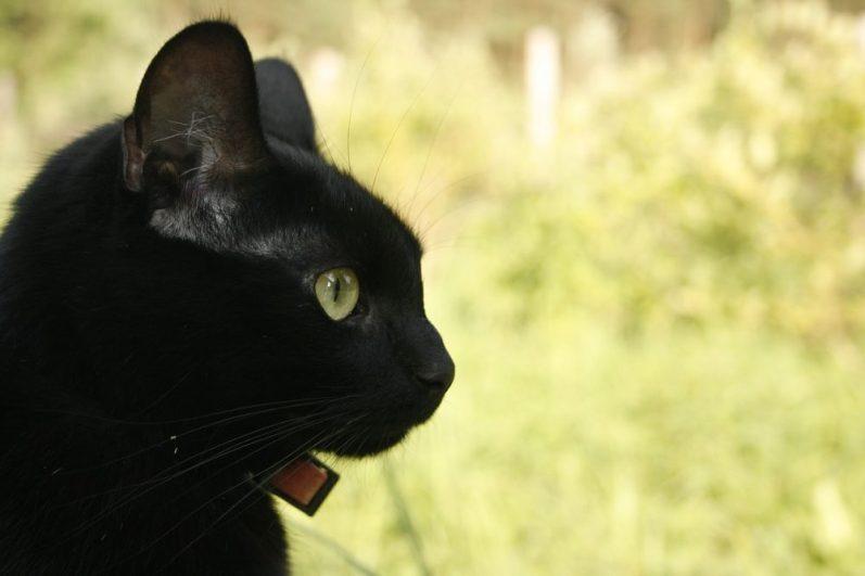 「裁量」を企業選びの軸(就活の軸)に考えている猫