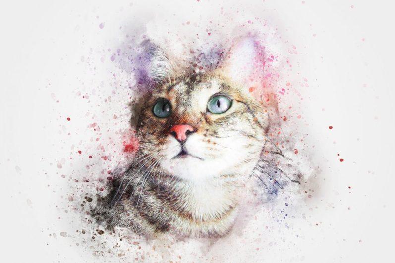 転職における資格の必要性と有利性が気になっている猫