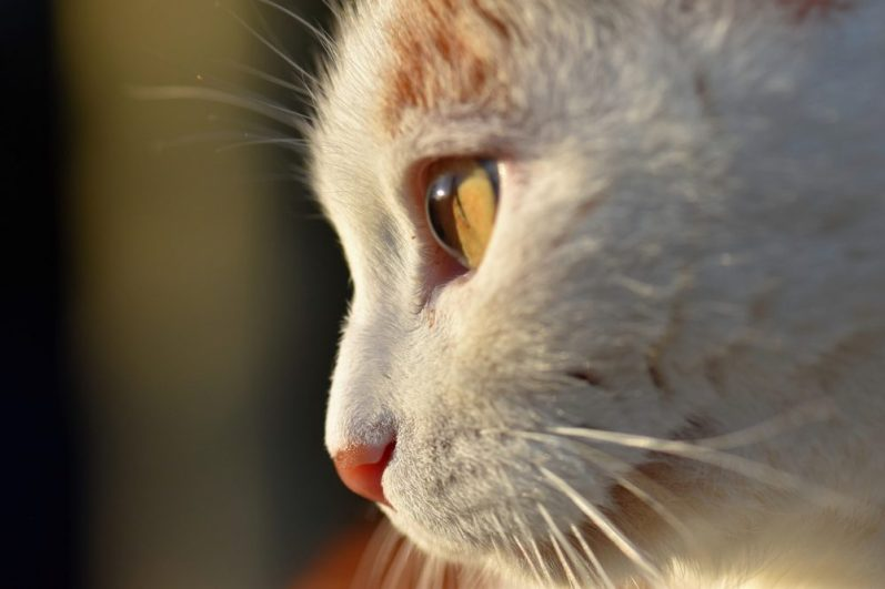 転職失敗リスクに備える猫