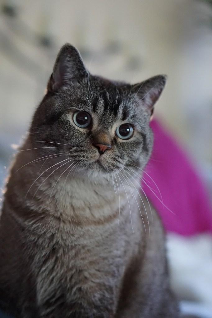 オファーレターを前に、顔がほころぶ猫