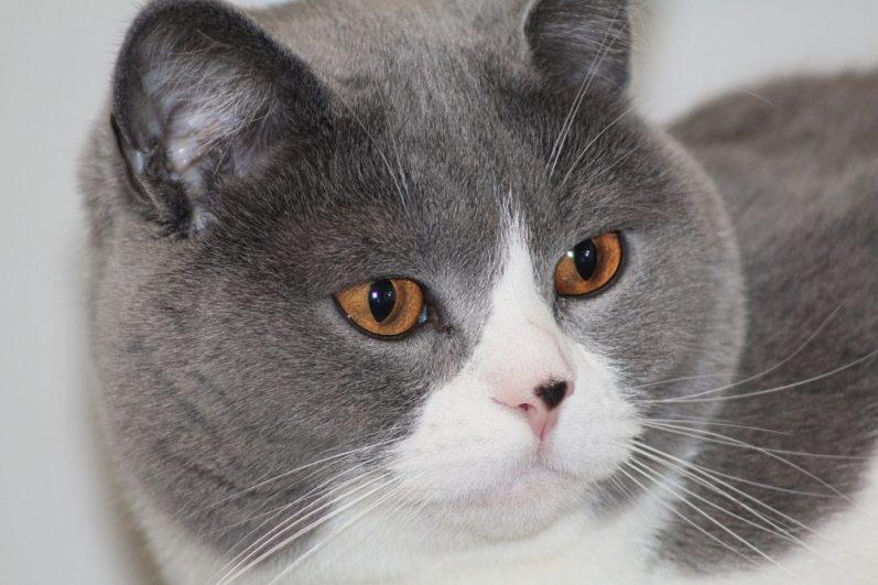 外資系投資銀行出身のバリバリのビジネス猫