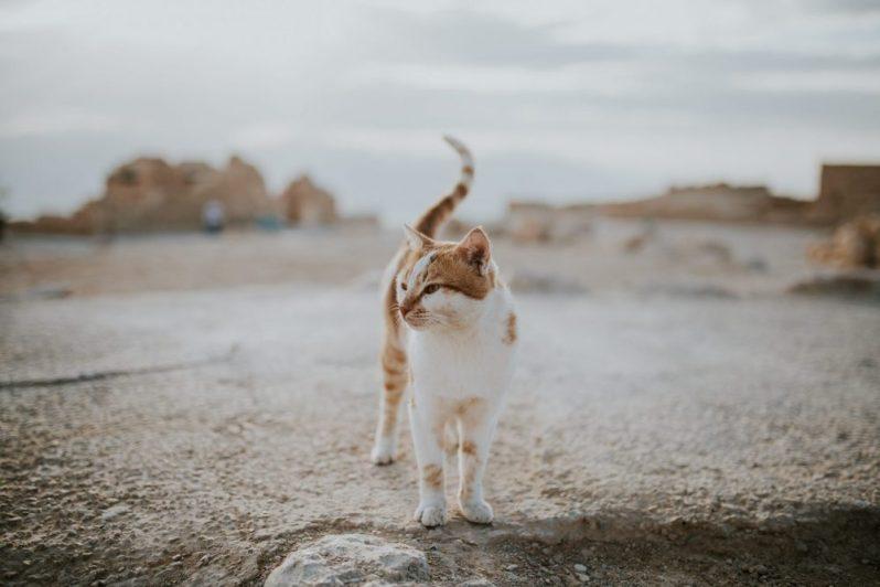 市場価値を高める方法を探す猫