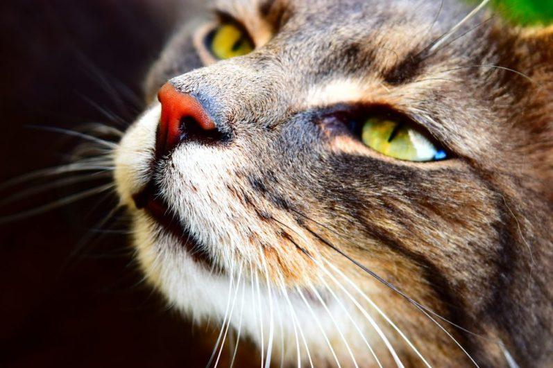 憧れを抱く猫