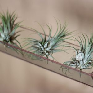 triangulo-terrario-Colgante-plantas-decoracion-hogar-oficina-naturaleza