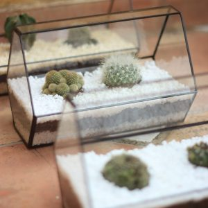 CACTARIO-terrario-cactus-plantas-decoracion-interior-plantas-hogar-oficina