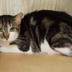 A1044296 - PATCHES