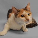 CHICAGO. My Animal ID # is A1043428.