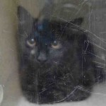 DUSTY. My Animal ID # is A1043189.