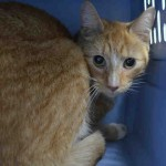 SCOTTY. My Animal ID # is A1043875.