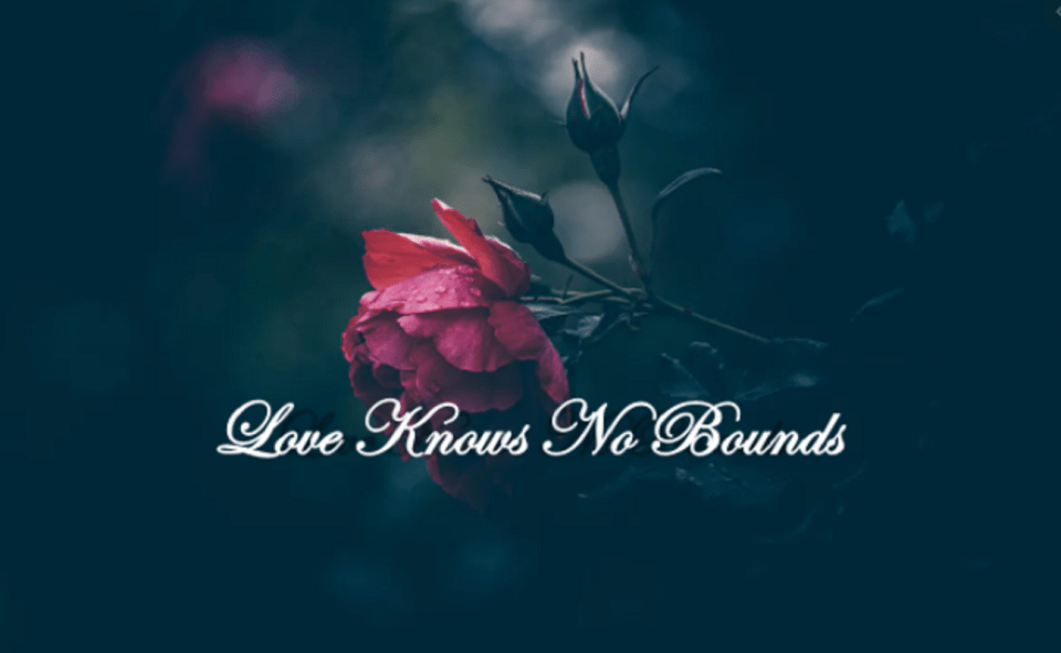 Image Of Love Knows No Bounds Novel Read Online Free