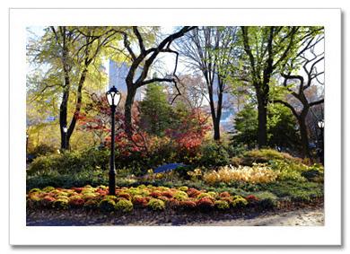 Fall Flowerbed Central Park NY Christmas Card HPC2066