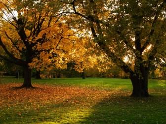 Foliage...
