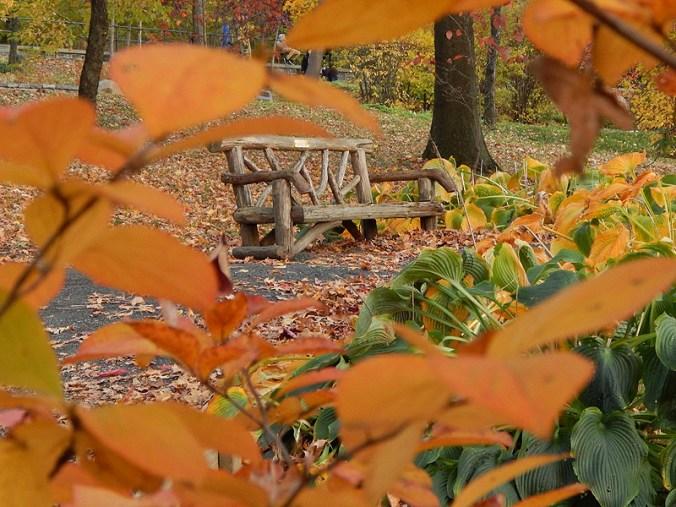 Bench in Healing Garden